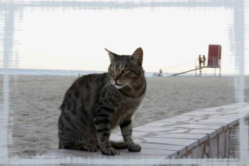 cat_catalo.jpg