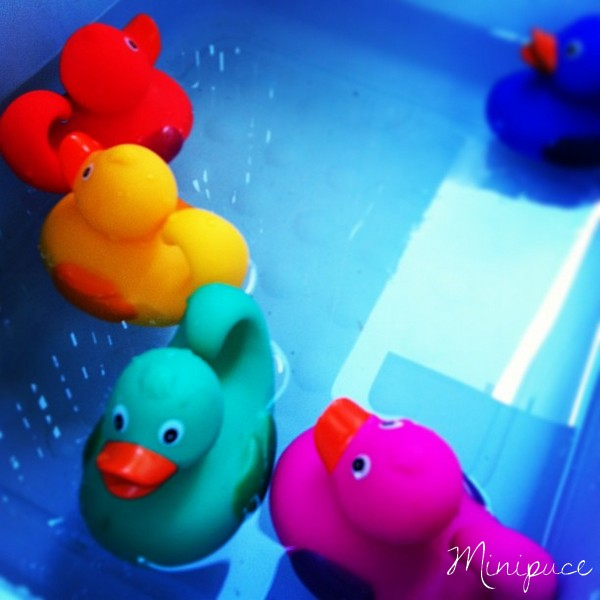 canard-multicolore.jpg