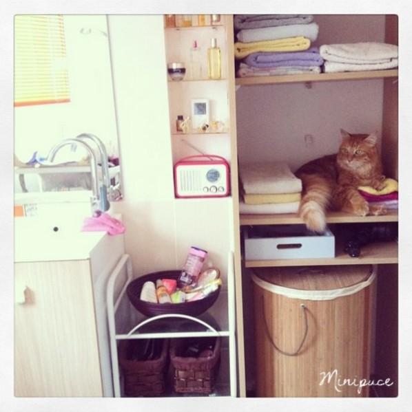 chat-dans-linge.jpg