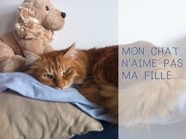 chat-roux-peluche.jpg