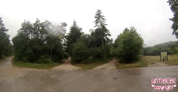 Première balade en forêt pour Minipuce