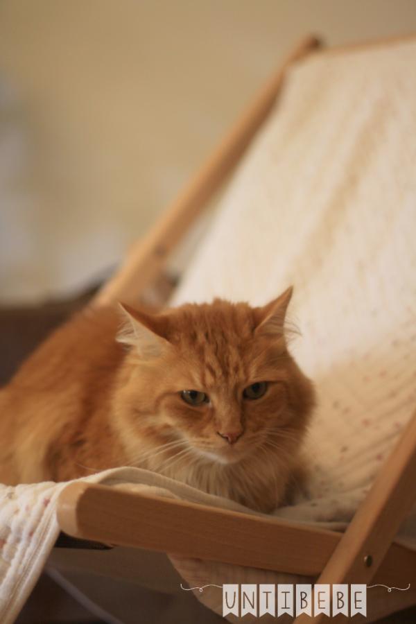 chat sur un transat