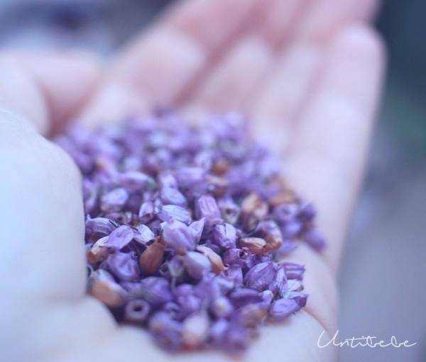 verveine fleurs sechees untibebe