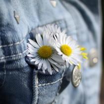 paquerettes poche jean 2