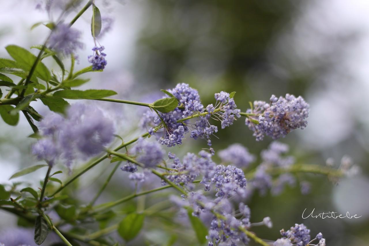 fleurs parme