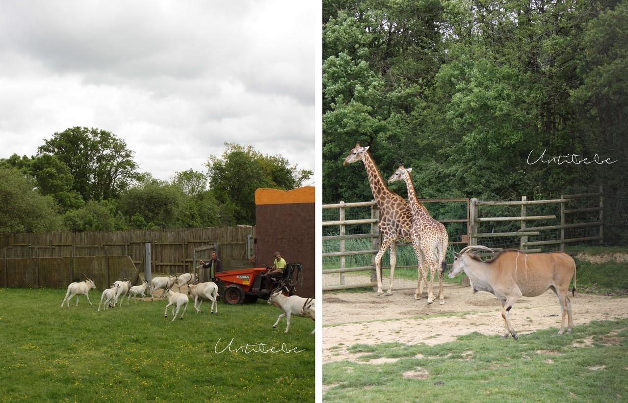 girafe planete sauvage