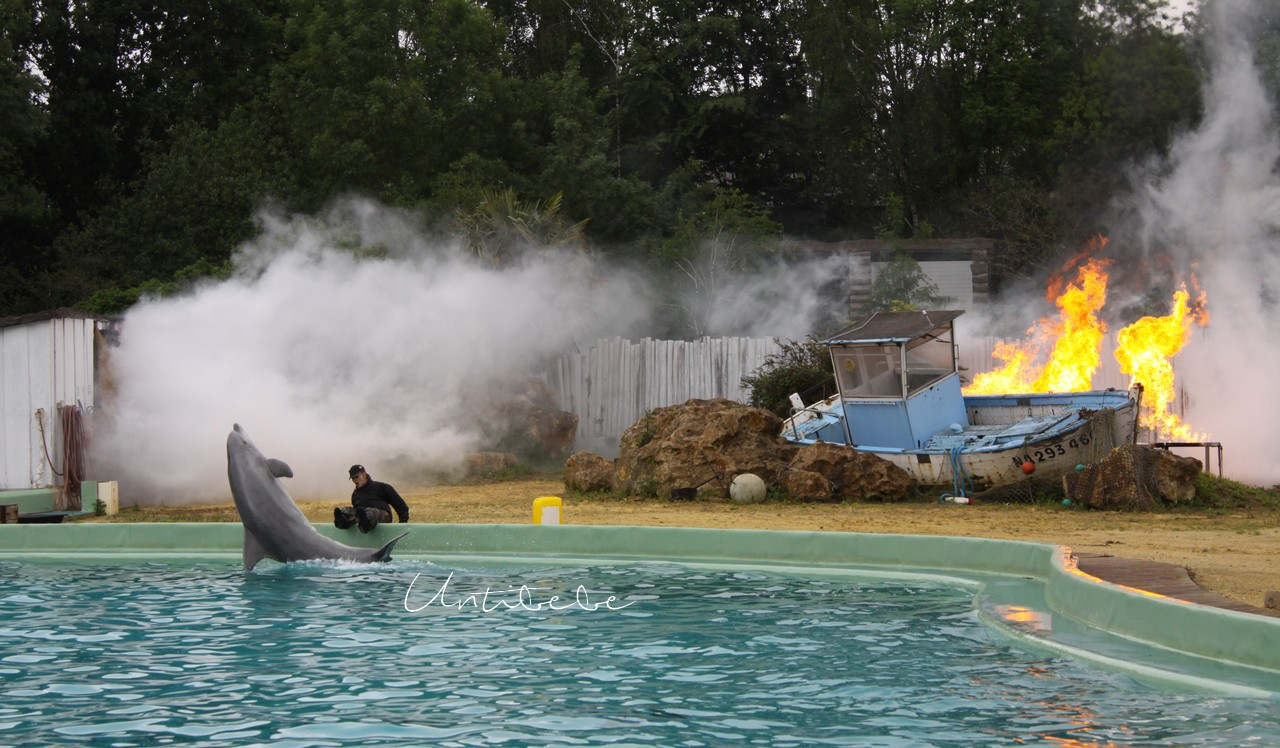 spectacle planete sauvage dauphins