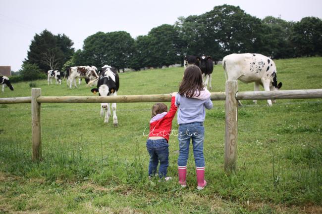 voir les vaches les castels chateaux lez eaux enfants