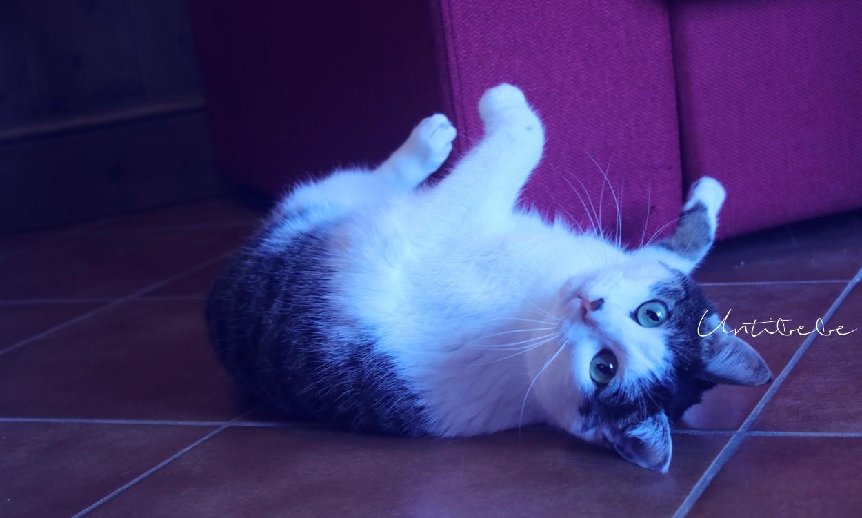 chats admis montgenevre mmv