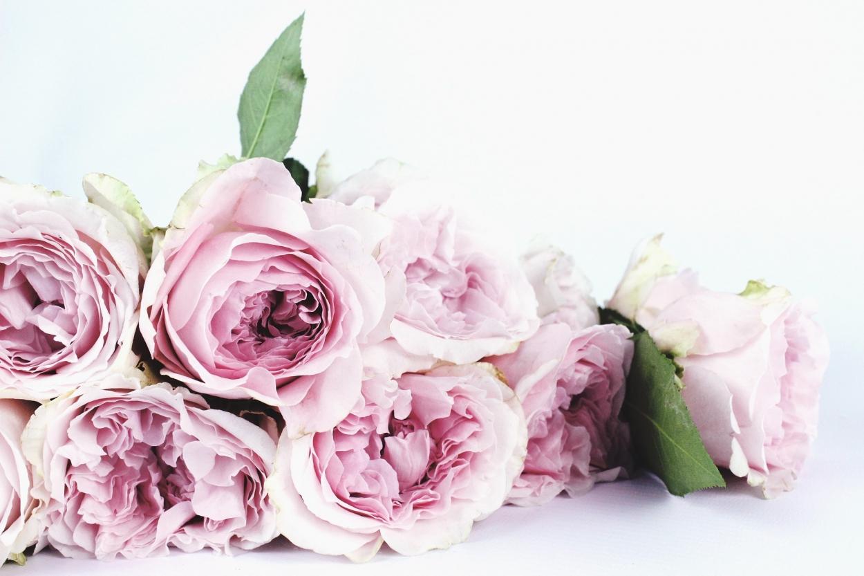 flower-1522242_1920