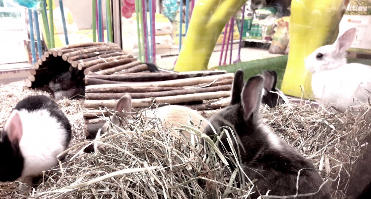 lapins enfant